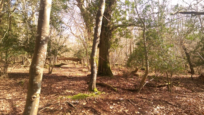 The lovely New Forest in sunshine
