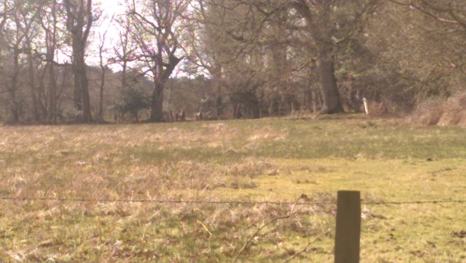 Not sure if you can see them, but there are two deer here.